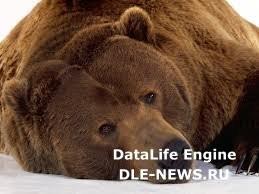 «Ангарскую деревню» закрыли из-за медведя
